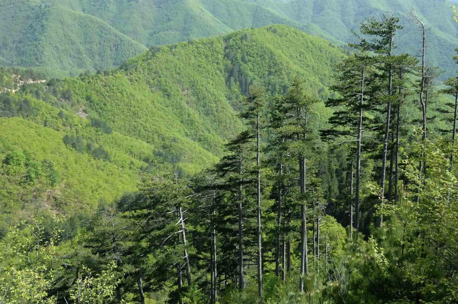 ανάρτηση των δασικών χαρτών της χώρας bg